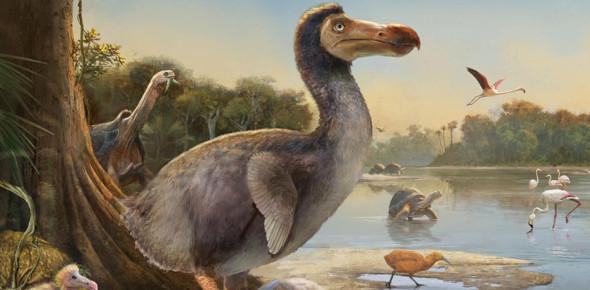 How Well Do You Know Dodo Birds?