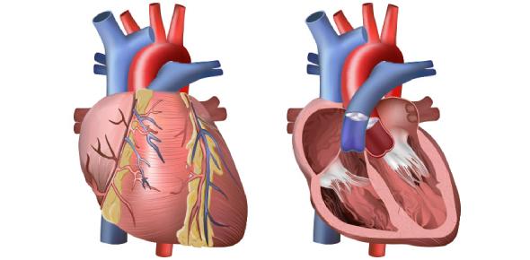 Anatomy Of Heart Quiz! #2