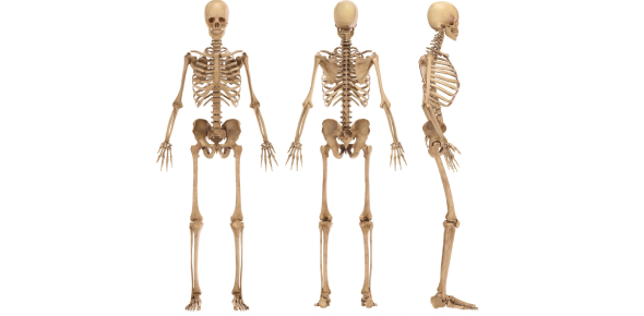 How Much You Know About Bones? Trivia Quiz