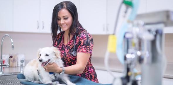 Veterinary Technology - Nursing - Quiz