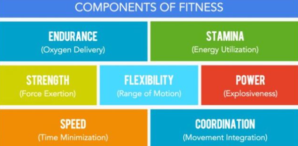 An Ultimate Quiz On Components Of Fitness! Trivia Questions And Facts