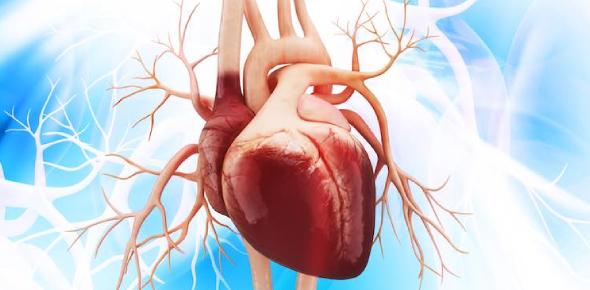 Anatomy Of Heart Quiz!