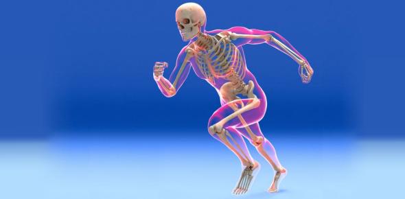 The Skeletal System Trivia! Quiz Questions!