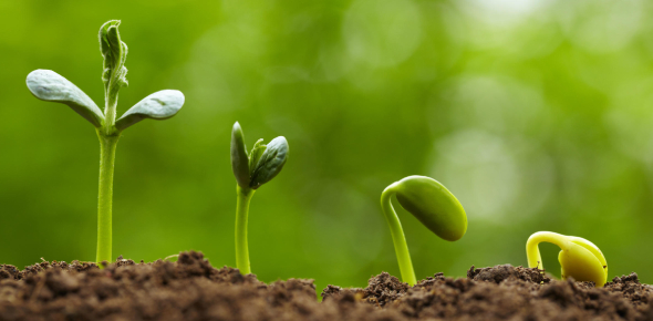 How Plants Grow? Trivia Facts Quiz