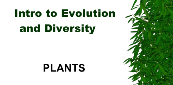 Evolution And Diversity Questions! Trivia Quiz
