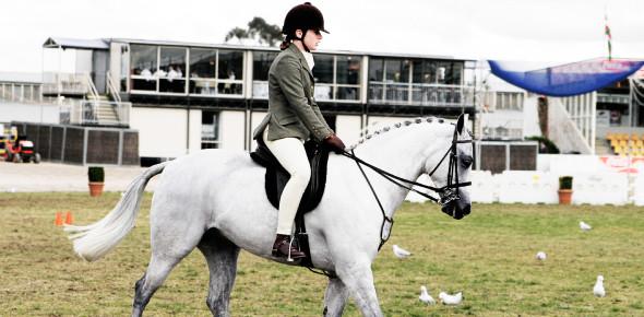 English Horse Riding Quiz