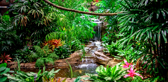 Trivia Quiz: What Do You Know About Tropical Rainforest?