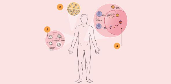 Immune System Trivia: MCQ Test! Quiz