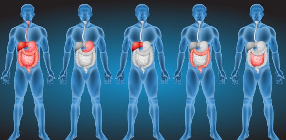 Digestive System Anatomy Quiz: Trivia!