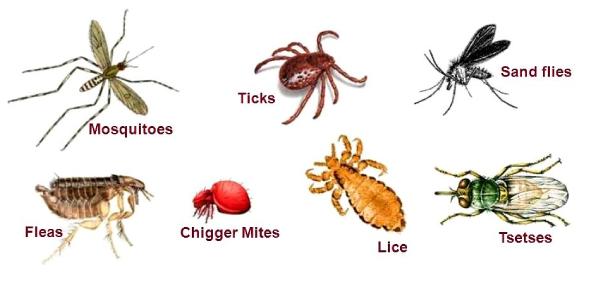 Quiz On Invertebrates, Arthropods And Arachnids!
