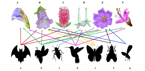 How Does Biodiversity Work? Learn In This Biology Quiz