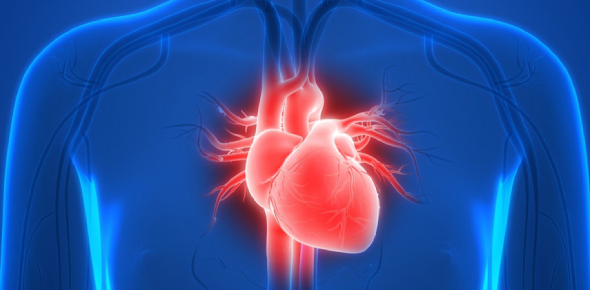 Quiz: How Much Do You Actually Know About The Human Heart?
