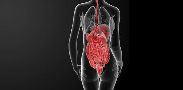 Body System Basics Quiz: Test!
