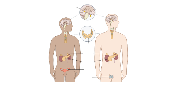 Endocrine System Disorders   NCLEX Quiz 98