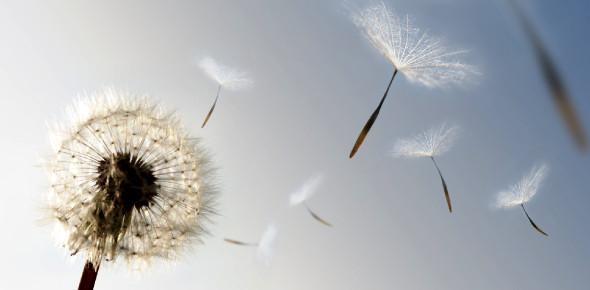 Air & Wind Quiz