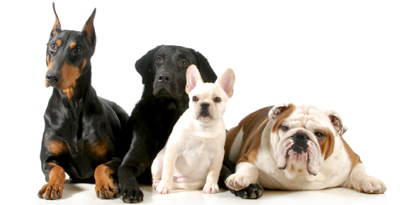 Quiz: Can You Name The Correct Dog Breed?