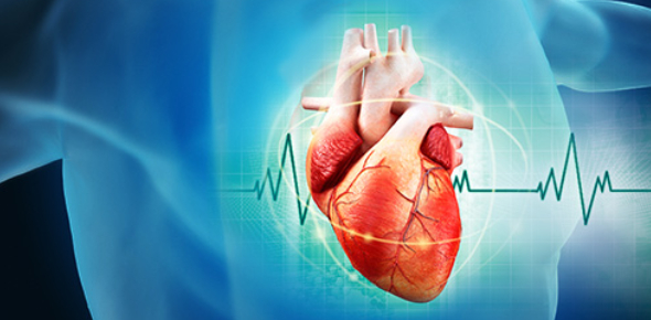 The Ultimate Human Heart Knowledge Quiz!