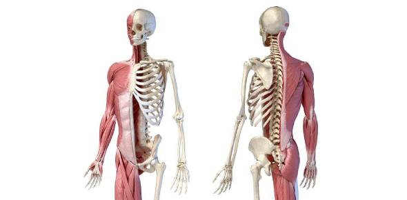 Trivia: The Body System Quiz! Test