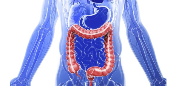 A Whole New Quiz On The Digestive System!