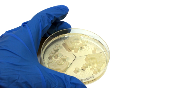 A Microbiology Quiz For Learners! Trivia Questions