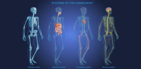 The Skeletal System Quiz! Ultimate Trivia