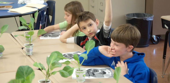 A Plants Quiz For 3rd Grade Students