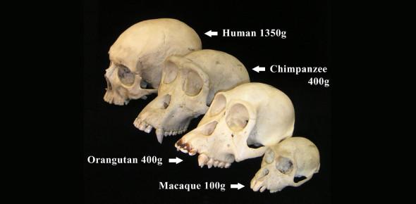 Anthropology Exam Quiz: Trivia Facts!