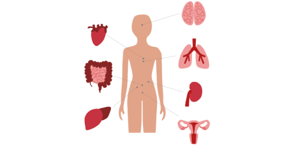 Digestive System: Organs And Functions! Quiz