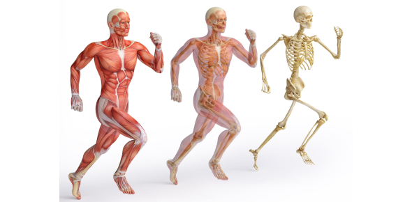 Ultimate Exam On Body Systems: Quiz!