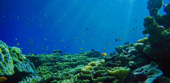 Ocean Environment Questions! 5th Grade Trivia Quiz