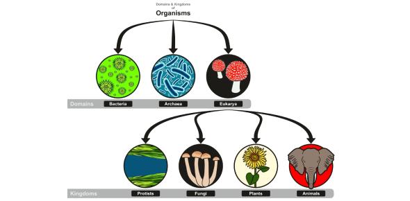 Classification Of Living Organisms! Trivia Questions Quiz