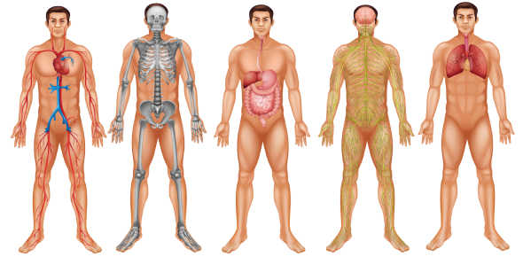 Body Systems Quiz: Could You Identify?