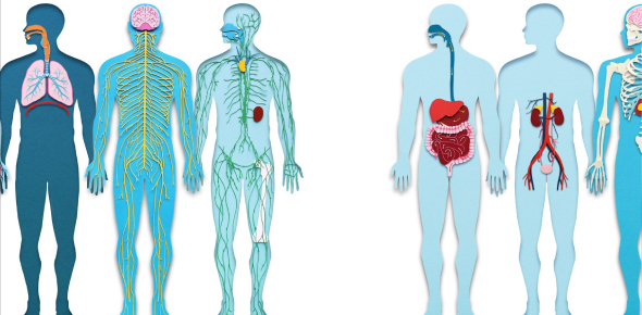 Quiz: Interactions Of The Human Body Systems