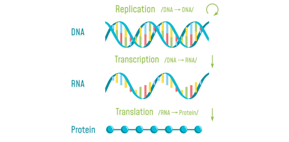 ACE Your Biology Exam - Biology Mock Test About RNA And Protein Synthesis