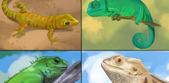 Choosing A Reptile