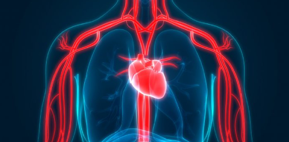 Ultimate Circulatory System Quiz: Trivia!