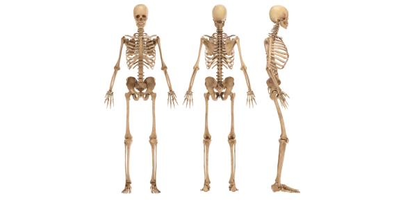 A Quiz On Bones: Trivia Facts!