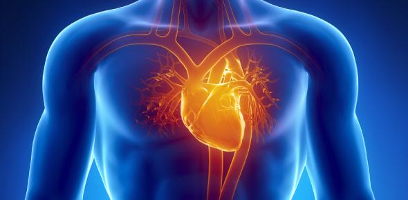 Circulatory System Quiz Questions: Exam!