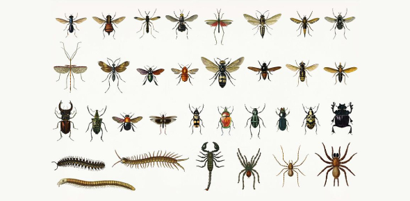 Type Of Insects Quiz: Trivia Facts!