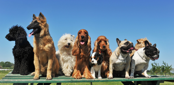 Quiz: What Dog Breed Is Right For Your Family?