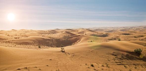 Desert Biome Trivia Questions: Quiz!