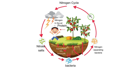 The Nutrient Cycle Quiz: Trivia!