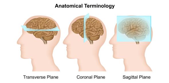 An Anatomical Terminology Quiz!