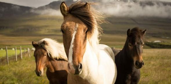 Famous Horse Trivia Quiz!