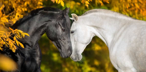 Quiz: Think You Know A Lot About Horses?