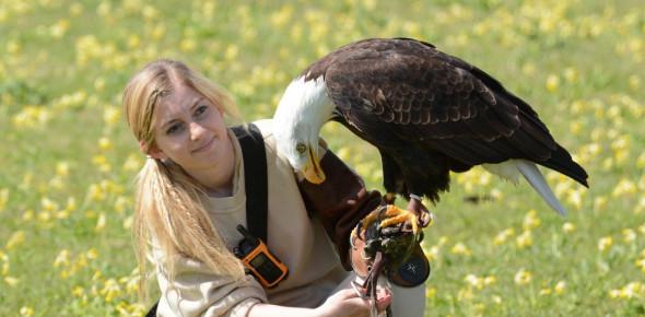 Hawk Conservancy Trust: Birds Of Prey! Quiz