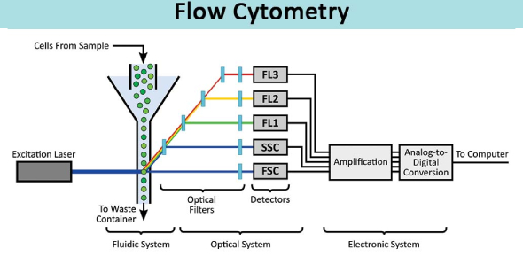 Flow Cytometry Quiz: Trivia Test!