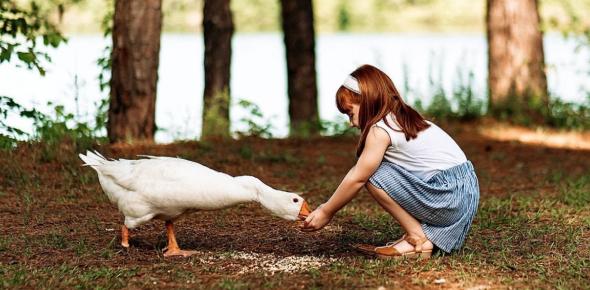 Animal Quiz (For Kids)