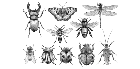 Fascinating Facts About Insects: Quiz!