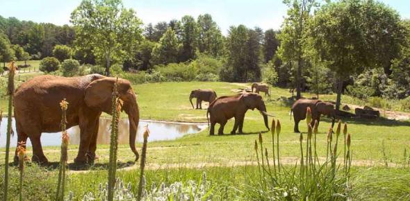 The North Carolina Zoo